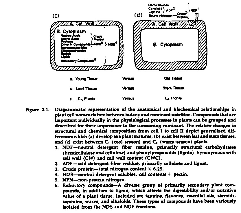 Chapter 4 Developmental Morphology and Physiology of Grasses – Comparing Plant and Animal Cells Worksheet