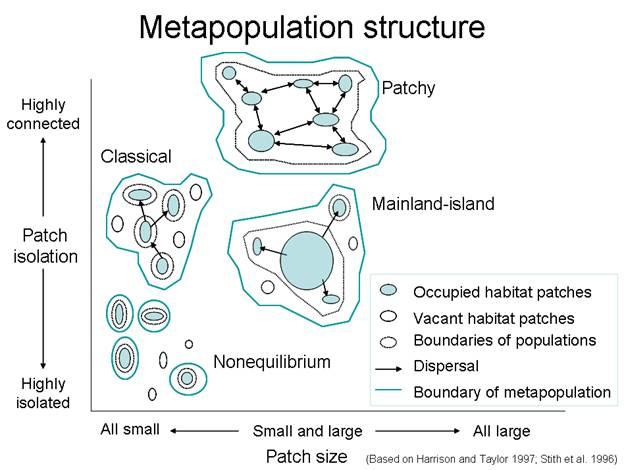 miller classification